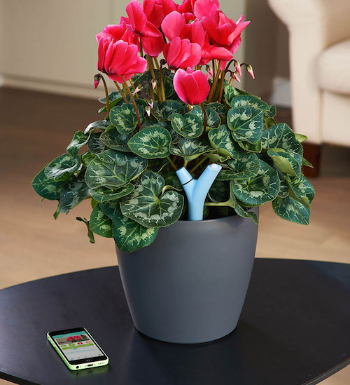 Flower_Poywer_insitu_21_Cyclamen_EN_Fertilizer_parrot